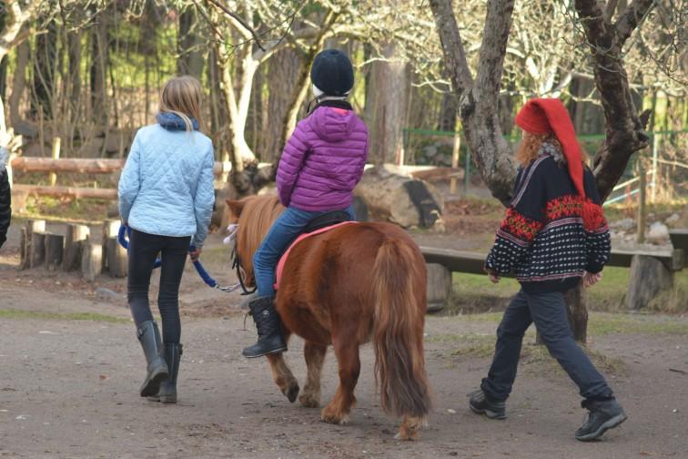Ponnyriding