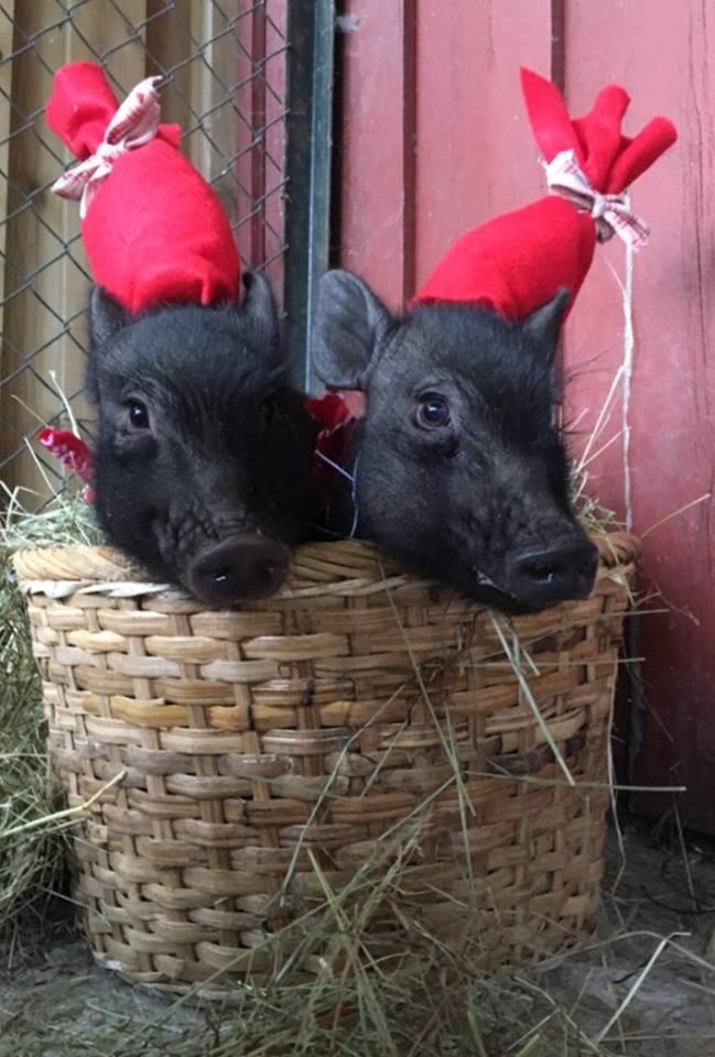 grisene i Andersrød barnehage julemarked