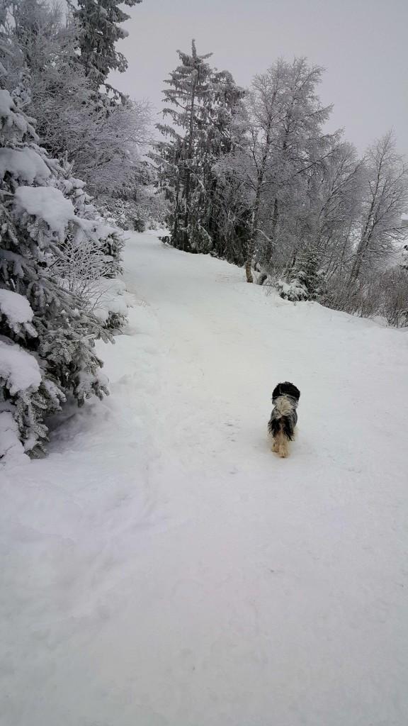 Hunden vår elsker snø
