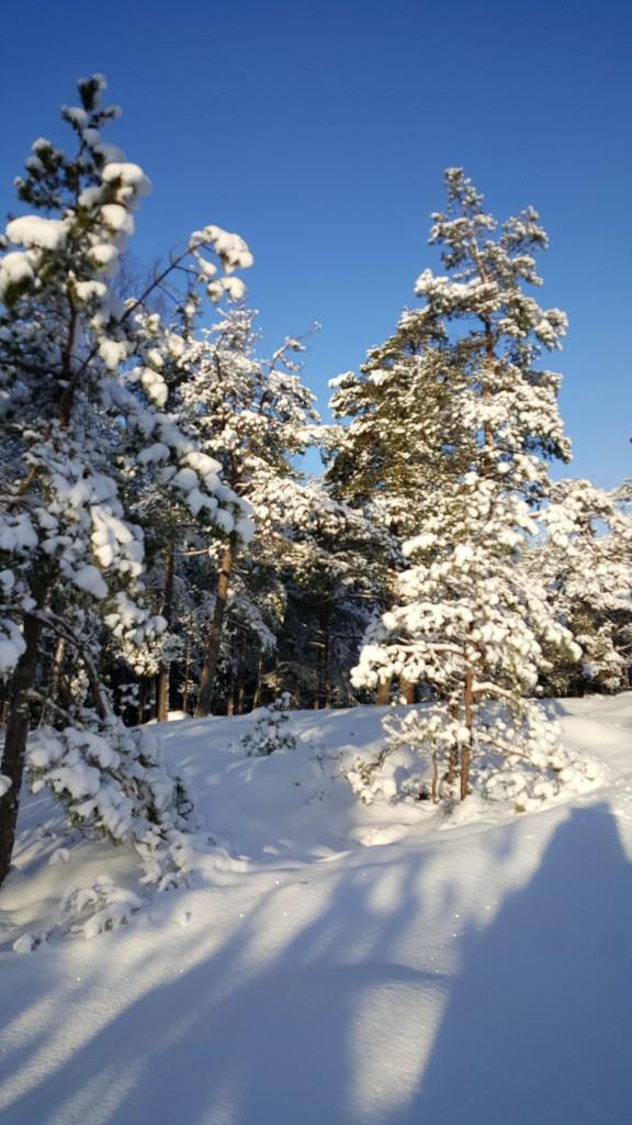 sol.blå himmel og snø