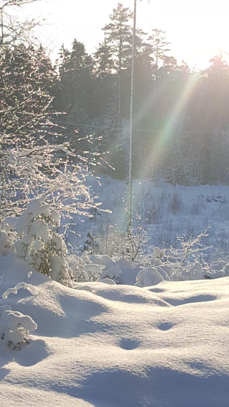 Vinterlandskap i Fredrikstadmarka