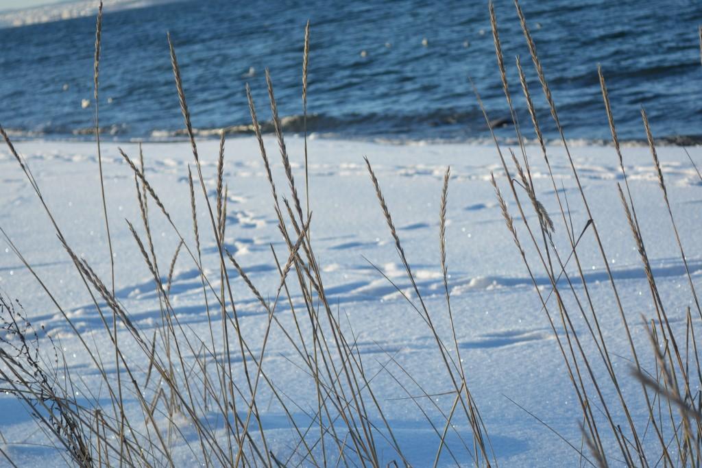 vinter på Refsnesstramda strå