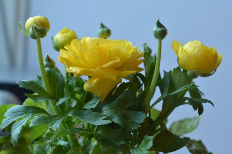 Den gule blomsten
