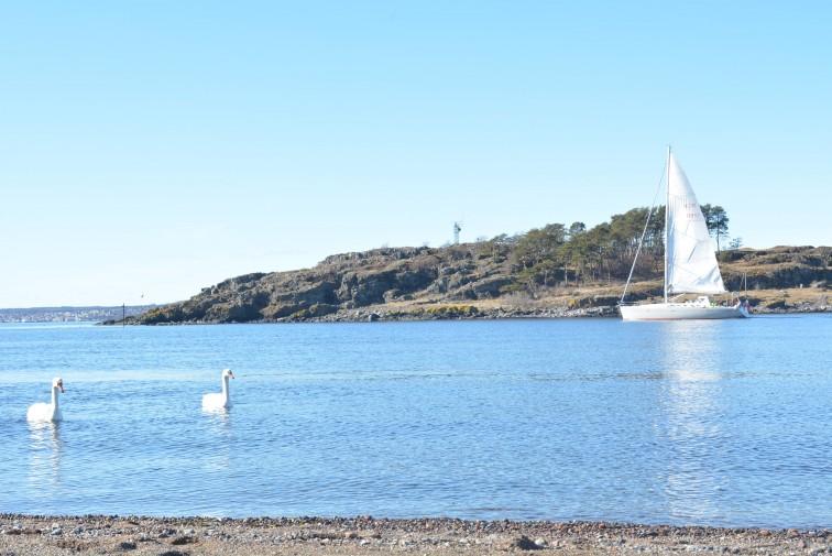Gullholmsudens idyll med seilbåt og svaner