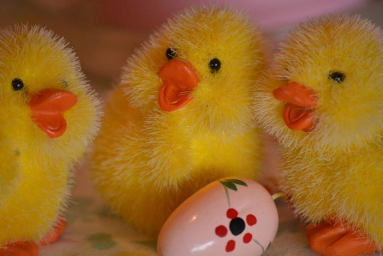 kyllinger og påskeegg