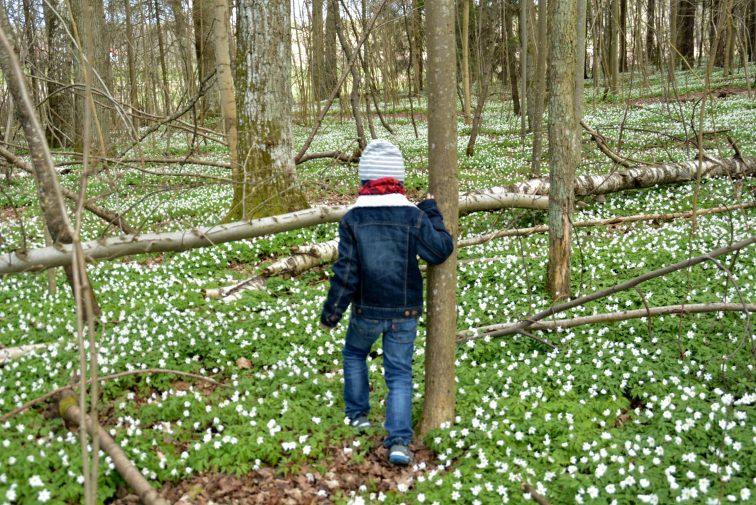 gutt i skogen, hvitveis