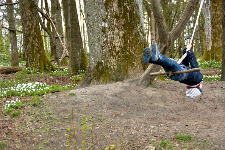femåring husker i skogen