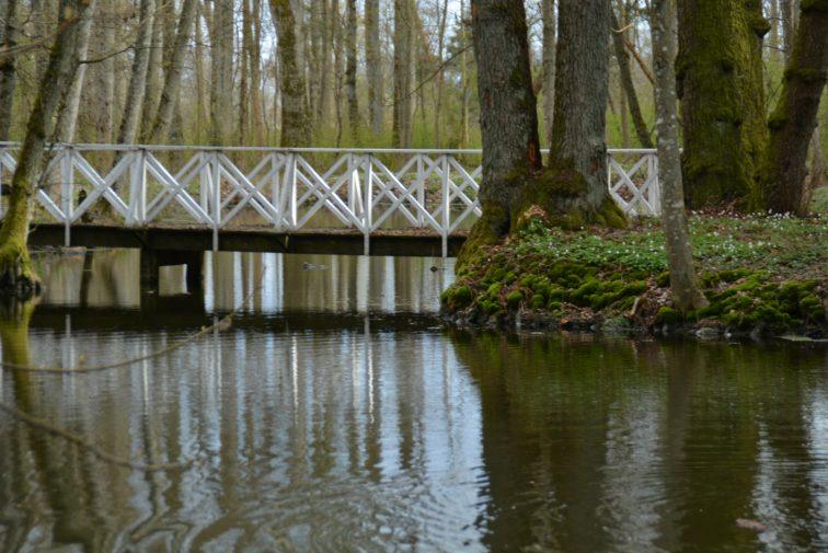 bro i skogen