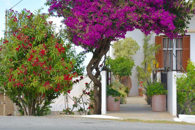 Inngangsparti Hellas, Kreta