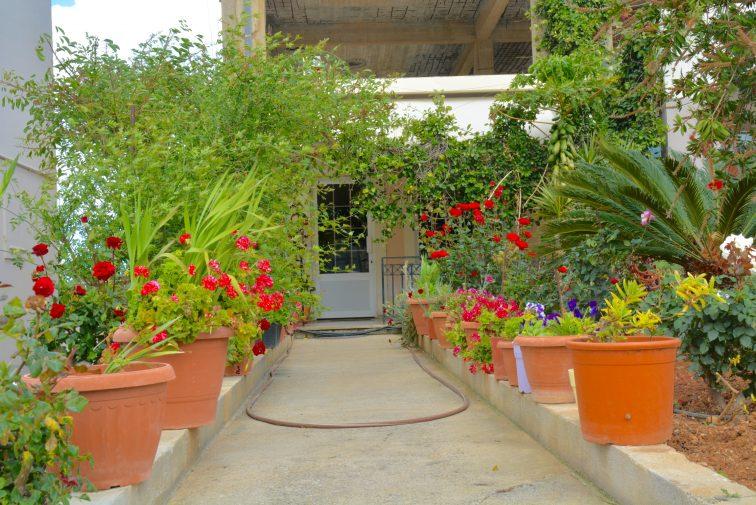 Blomster i krukker, Kolombari Kreta
