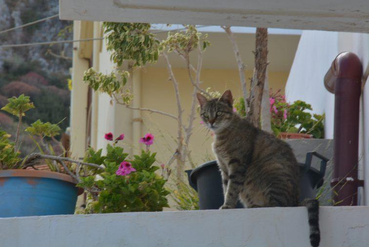 katt og blomsterkrukker Hellas