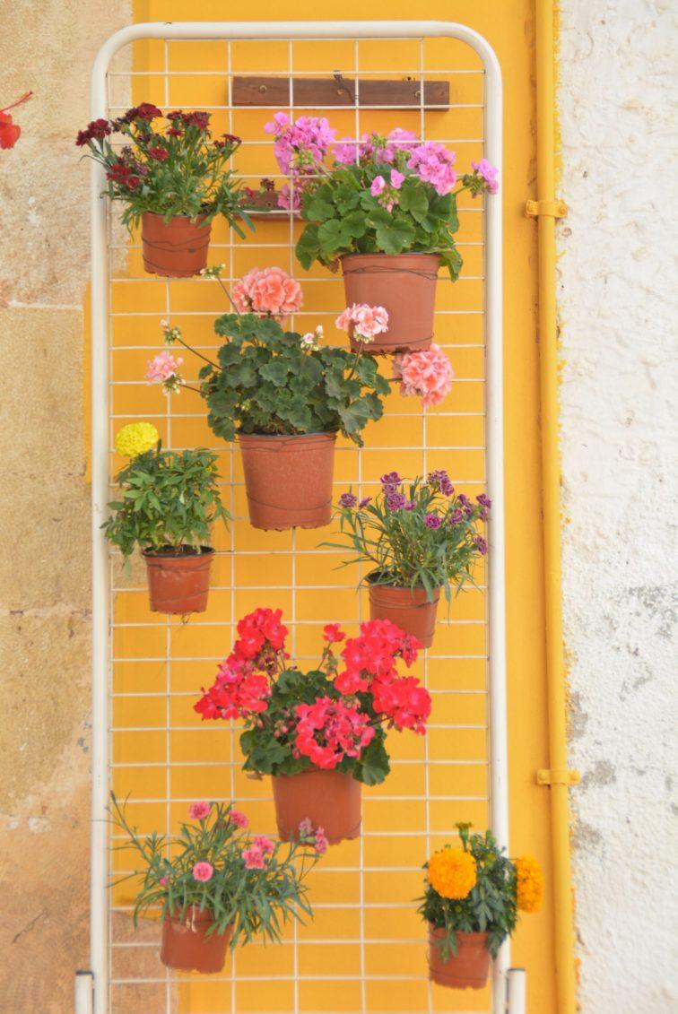 Pelagonia på vegg