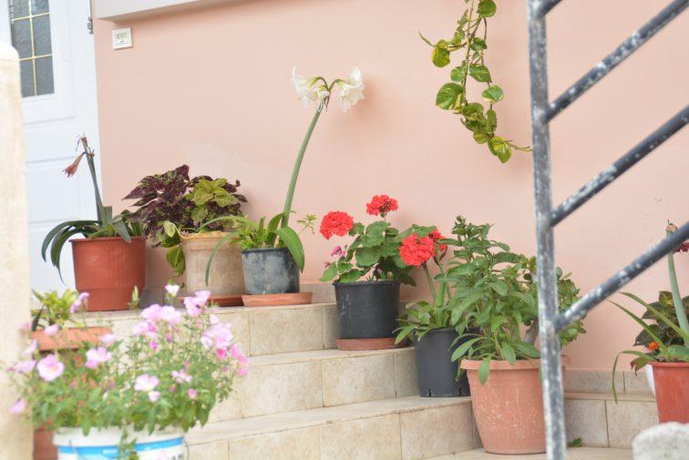 blomsterkrukker, Kreta