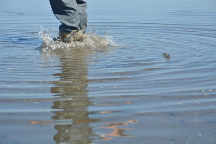DSC_6592Gutt leker i vann med barnevadere