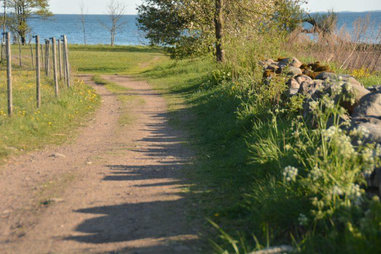 stien ned til Reierstranden Jeløy