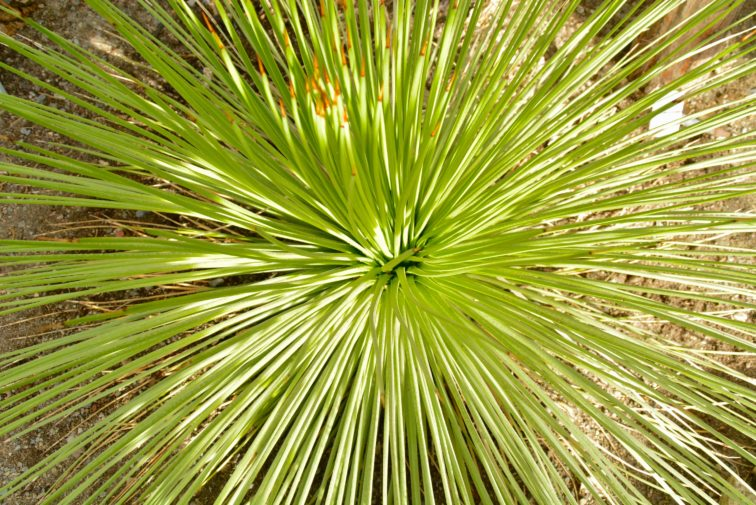 plante i botanske hage PETRUS OG petrine