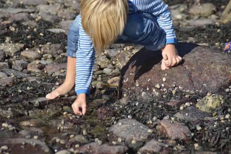 Lek og læring i fjæra Foto: Petrus og petrine