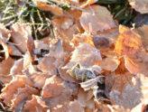 Høst og frost på en torsdag